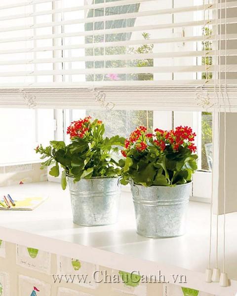 Cửa sổ bắt mắt và tràn đầy sức sống với các mẫu chậu cảnh đẹp