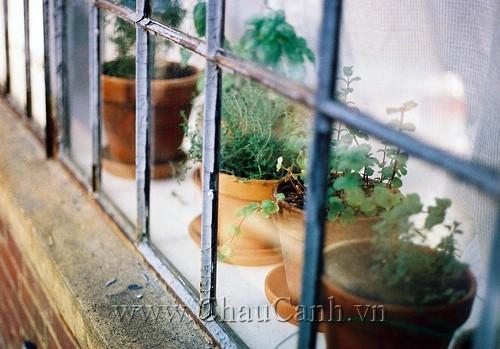 Giải pháp hoàn hảo trang trí cửa sổ bằng các mẫu chậu cảnh đẹp