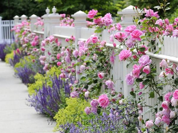 Mẫu chậu cây cảnh đẹp cho khu vườn thêm thanh lịch
