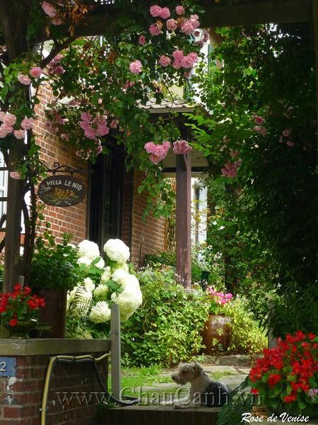 Khu vườn đáng yêu hơn nhờ những mẫu chậu cây cảnh đẹp