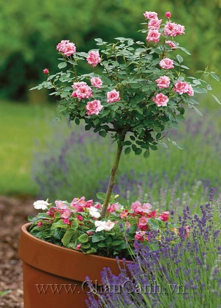 Làm mới khu vườn với các mẫu chậu cây cảnh đẹp