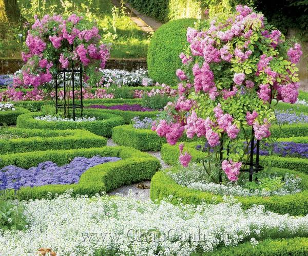 Mẫu chậu cảnh đẹp cho khu vườn xinh